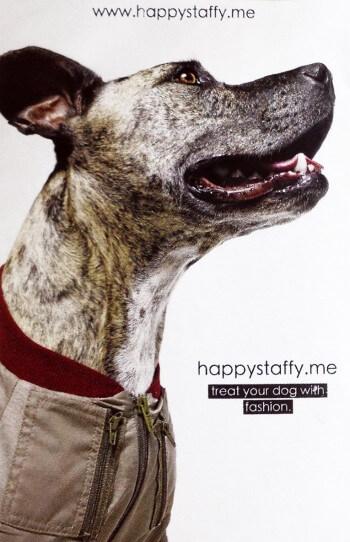 Happy Staffy